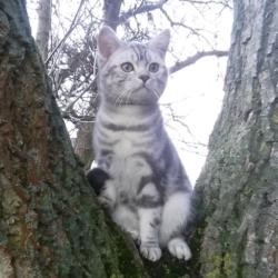 ztracená kočka 17.8.