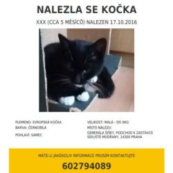 Nalezená kočka 18.10