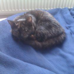 nalezené kotě praha 4