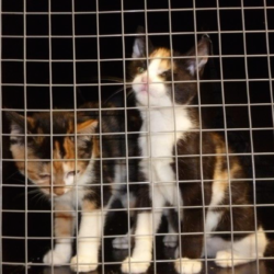 Vítáme nové přírůstky – koťata Rosie a Lady