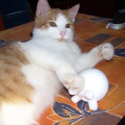 Proměnil se nějak váš život, když jste si pořídili kočku?