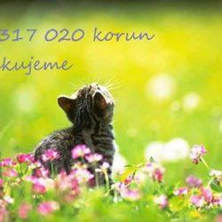 kocici_prani_vysledek