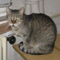 Kočky z nemocnice – Visine