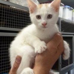 Uřvaná koťata – Curtis