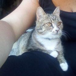 Ztracená kočka Amálka
