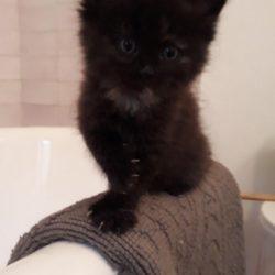 Ruby – černé kotě z kulaťáku