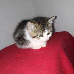 Aši – pohodové kotě od drážního domku
