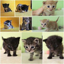 Nakrmte hladová koťata