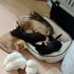 Koťata z kyblíku rostou jako z vody