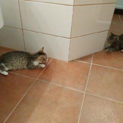 Locika a Čekanka z nového domova