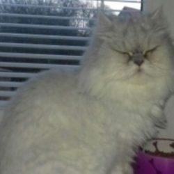 Ztratila se kočka Meggie