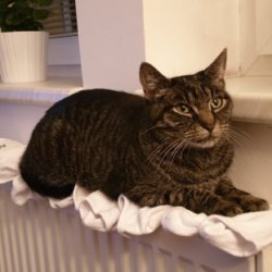 Ztratila se kočka Anička